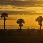 Dawn in Colombia's eastern plains, or Llanos.